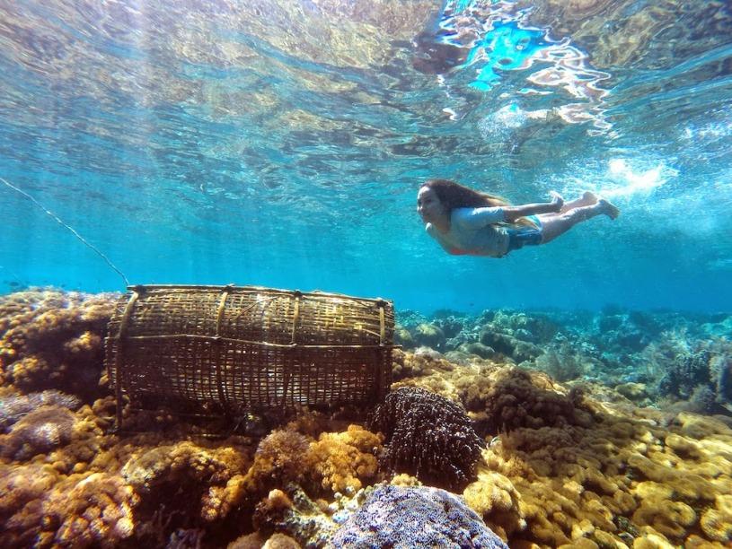 Wisata Laut, Alor Nusa Tenggara Timur (sumber foto : http://marischkaprudence.blogspot.co.id/2014/08/places-to-snorkel-in-alor.html)