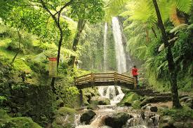 Wisata Alam Gunung Kidul, Sumber Foto : http://limakaki.com